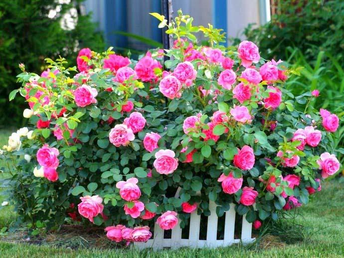 Летом цветники выглядят наиболее эффектно